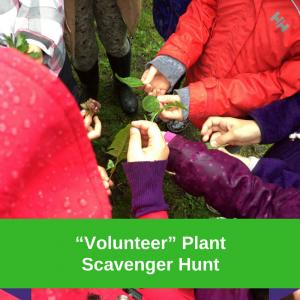 """""""Volunteer"""" Plant Scavenger Hunt"""