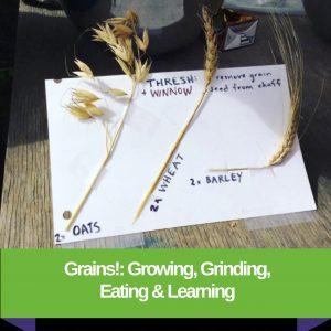 Grains!: Growing, Grinding, Eating & Learning